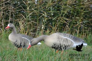 Pack 6 oies rieuses Full body PRODECOYS